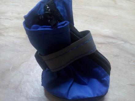 стильные синие ботиночки на среднюю собачку размер 1,5 фирма ЛАРИ производство У. Николаев, Николаевская область. фото 3