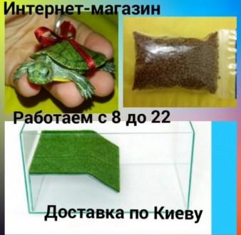 Комплект : маленькая красноухая черепашка 4-5 см+ террариум с мостиком + корм. Киев. фото 1