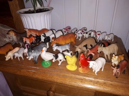 Домашние животные. Берегово. фото 1