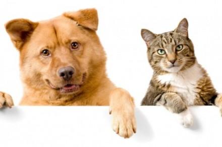 Передержка домашних животных. Полтава. фото 1