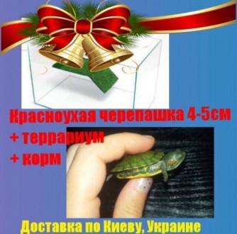 Черепашка красноухая+комплект. Киев. фото 1