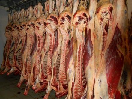 Продам яловичину/конину. Львов. фото 1
