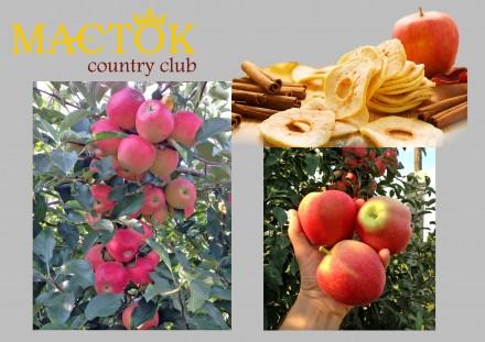 Яблучні чіпси. Кропивницкий. фото 1