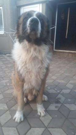 Продам собаку. Мелитополь. фото 1