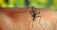 Уничтожение комаров на открытых участках. Днепр. фото 1