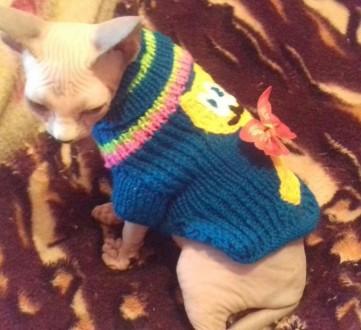 Продам котёнка канадского сфинкса, колорная биколорная (глазки голубые) очень ла. Северодонецк, Луганская область. фото 5