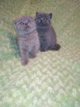 Котята. Винница. фото 1