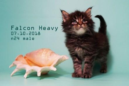 Пребольшие котята МЕЙН-КУН. Винница. фото 1