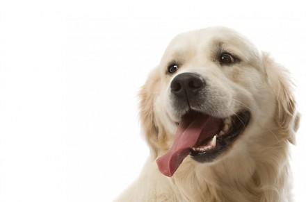 Вызов ветеринара на дом Киев - центр скорой ветеринарной помощи. Киев. фото 1