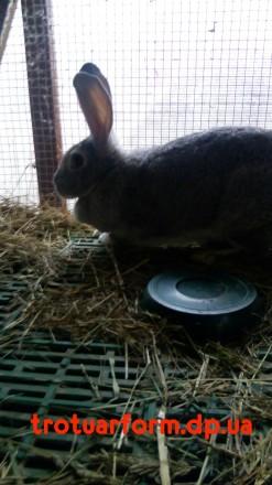 Пластиковые полы для кроликов, Пластиковый настил для кроликов, Полы д. Днепр. фото 1