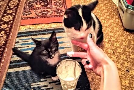 Котёнок в добрые руки. Вольнянск. фото 1