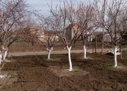Обрезка сада, уход за участком. Хмельницкий. фото 1
