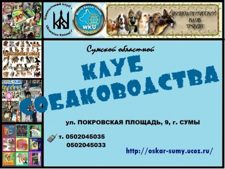 Приглашаем в Сумской областной клуб собаководства. Сумы. фото 1