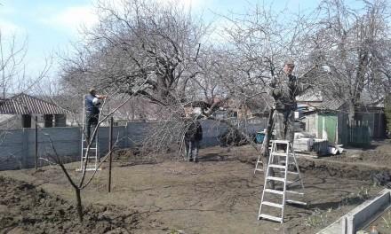 Обрезка, кронирование деревьев и кустарников. Запорожье. фото 1