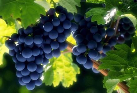 виноградный сок. Киев. фото 1