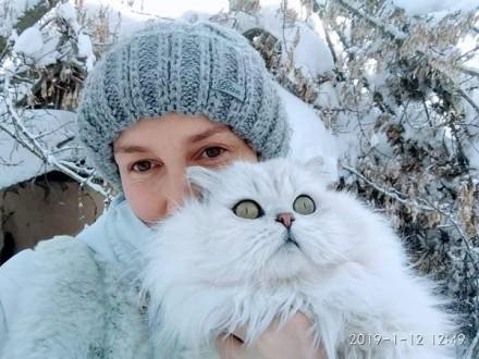 Британский кот из питомника с отличной родословной , Чемпион породы WCF, серебри. Одесса, Одесская область. фото 5