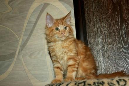 замечательные котята. Винница. фото 1