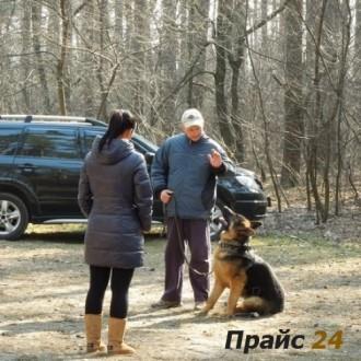 Дрессировка собак в Броварах и Броварском р-не.. Бровары. фото 1