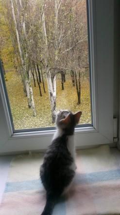 Отдадим котика в хорошую и любящую семью. Запорожье. фото 1