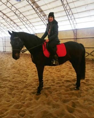 Вы научитесь управлять лошадью, правильно держаться в седле, ездить разными аллю. Харьков, Харьковская область. фото 4