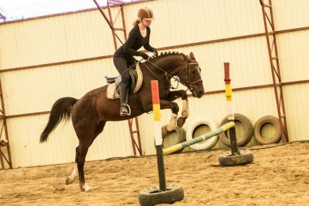 Вы научитесь управлять лошадью, правильно держаться в седле, ездить разными аллю. Харьков, Харьковская область. фото 3