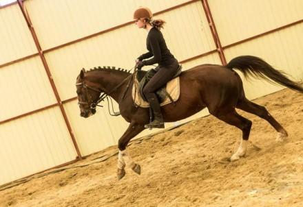 Вы научитесь управлять лошадью, правильно держаться в седле, ездить разными аллю. Харьков, Харьковская область. фото 2