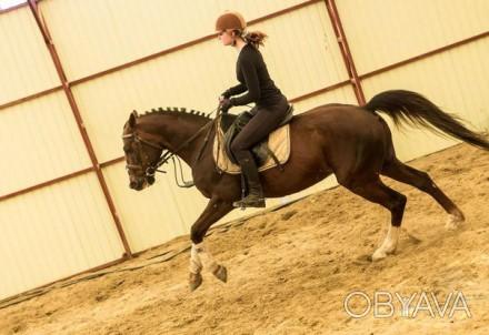 Вы научитесь управлять лошадью, правильно держаться в седле, ездить разными аллю. Харьков, Харьковская область. фото 1