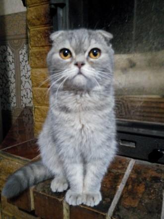 Продам кота. Кременчуг. фото 1