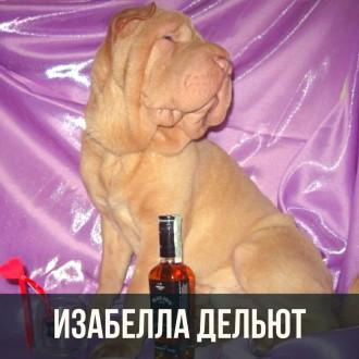 Щенки шарпея. Шоу класс, под разведение. Киев. фото 1