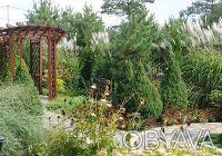 Ландшафтное проектирование, услуги ландшафтного дизайнера, благоустройство участ. Днепр, Днепропетровская область. фото 10