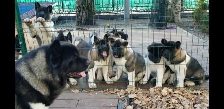 Продажа щенков. Запорожье. фото 1