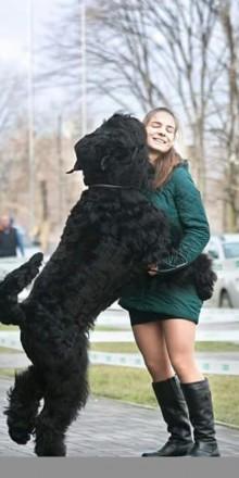 Продаются щенки русского черного терьера. Мариуполь. фото 1