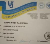 Милейшие черные терьерчики, которые 15.02.19 прошли актировку, получили документ. Мариуполь, Донецкая область. фото 9
