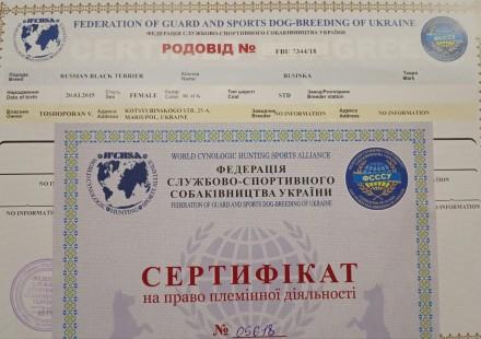 Милейшие черные терьерчики, которые 15.02.19 прошли актировку, получили документ. Мариуполь, Донецкая область. фото 3