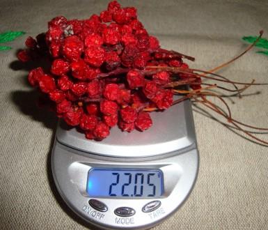 Ягоды лимонника китайского, 25 гр.. Обухов. фото 1