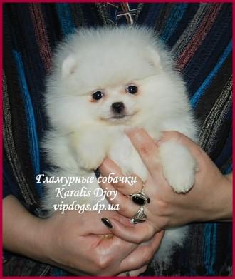 Наши щенки с гарантированными породными качествами (уравновешенным характером и . Харьков, Харьковская область. фото 6