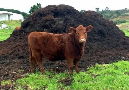 Гній коровячий, чорнозем, торфокрихта, земля на вимостку. Луцк. фото 1