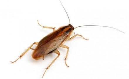 Уничтожение тараканов. Днепр. фото 1
