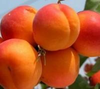 у продажі найрізноманітніші сорта плодових дерев, деталі  звертайтесь за тел,. Киев, Киевская область. фото 2