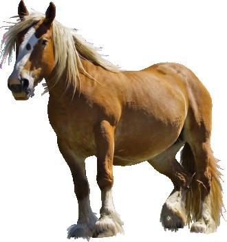 купуємо коней у великих кількостях і шукаємо партнерів. Тернополь. фото 1