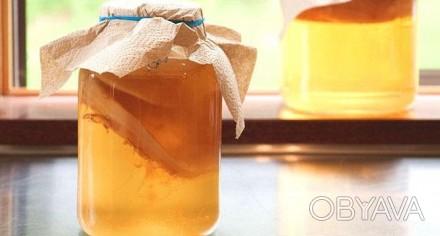 Поднимаем иммунитет напитками.  Комбуча (чайный гриб) – это полезный ферментир. Днепр, Днепропетровская область. фото 1
