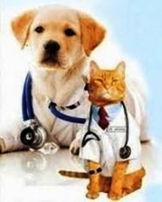 Стерилізація кішок та собак. Тернополь. фото 1