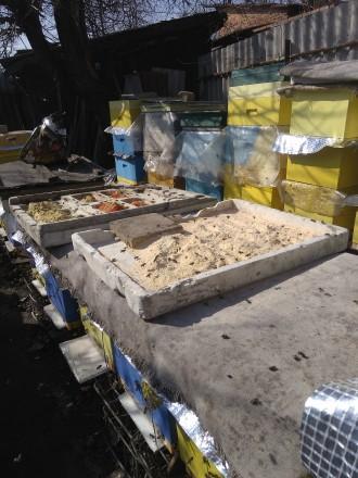 Пчелопакеты. Славянск. фото 1