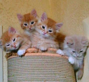 Маленькі рижики шукають дім.. Збараж. фото 1
