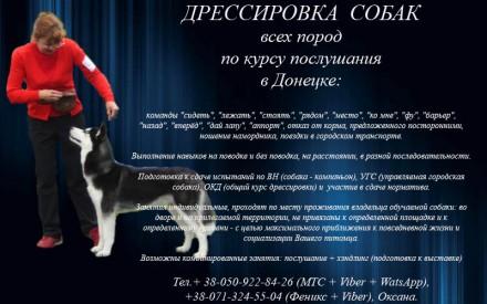 Дрессировка собак по курсу послушания в Донецке, хэндлинг. Донецк. фото 1