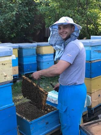 Мед/пыльца/домашний мёд/мед оптом/купить мед. Днепр. фото 1