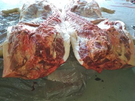Продам свині на мясо, бита вага.  Можна частинами (чвертками).  68 грн. за кг . Ивано-Франковск, Ивано-Франковская область. фото 4