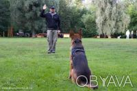 Индивидуальная дрессировка собак.Киев (Левый берег). Киев. фото 1