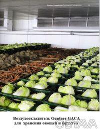 Овощехранилища. Холодильные и морозильные камеры.. Киев. фото 1