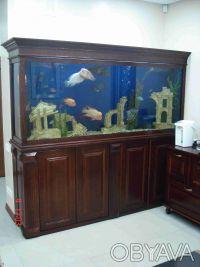 Обслуживание аквариумов!. Киев. фото 1